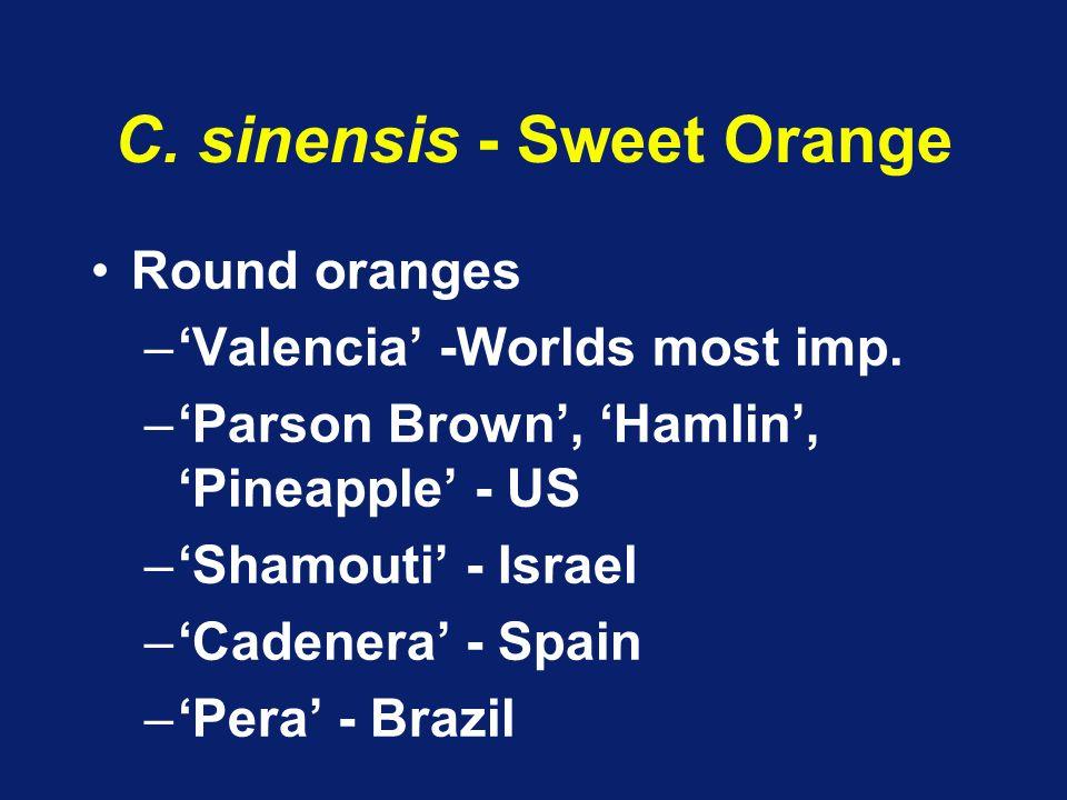 C. sinensis - Sweet Orange