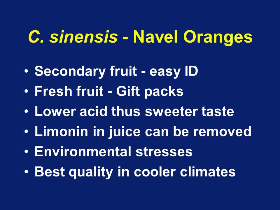 C. sinensis - Navel Oranges