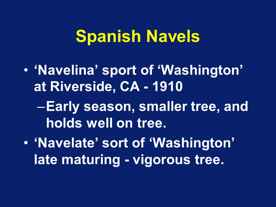 Spanish Navels 'Navelina' sport of 'Washington' at Riverside, CA - 1910. Early season, smaller tree, and holds well on tree.