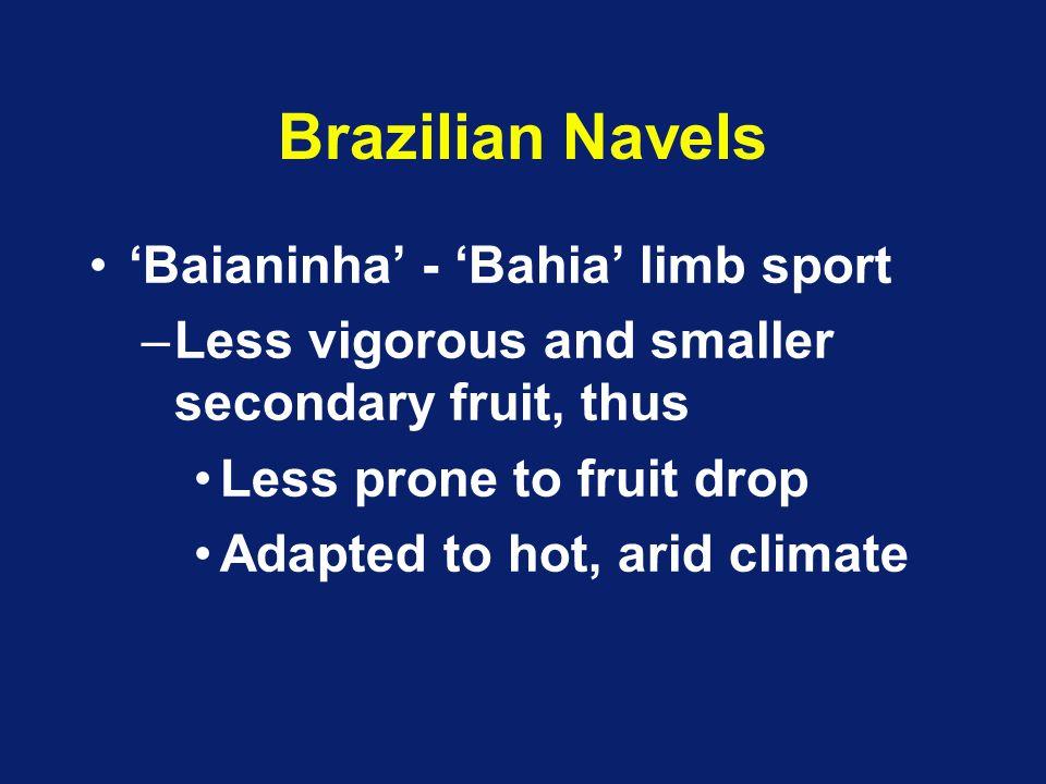 Brazilian Navels 'Baianinha' - 'Bahia' limb sport