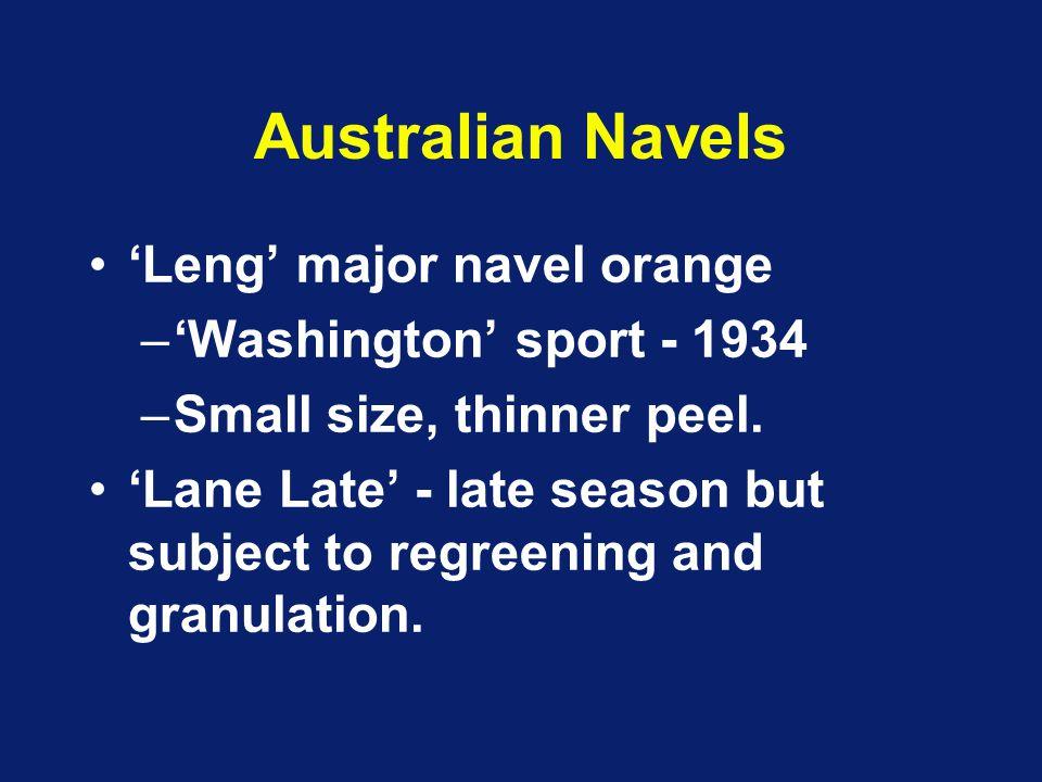 Australian Navels 'Leng' major navel orange 'Washington' sport - 1934