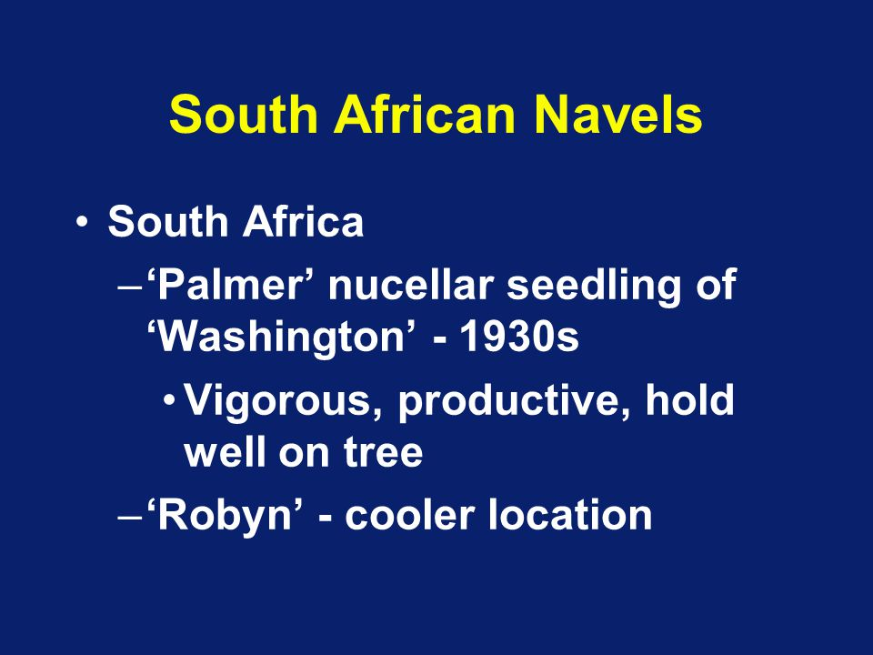 South African Navels South Africa