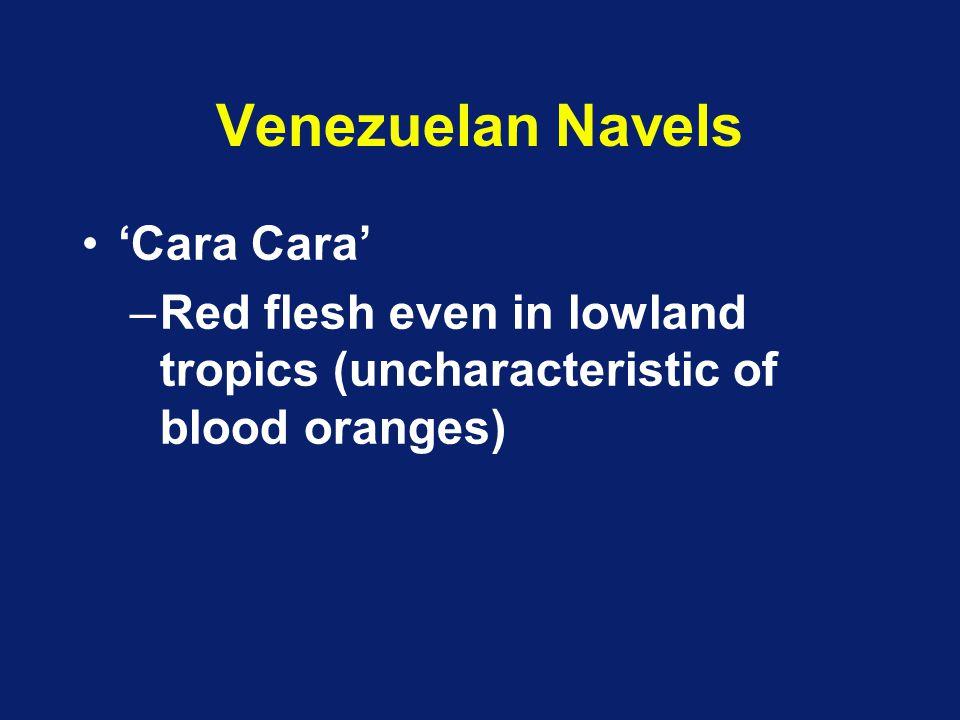 Venezuelan Navels 'Cara Cara'