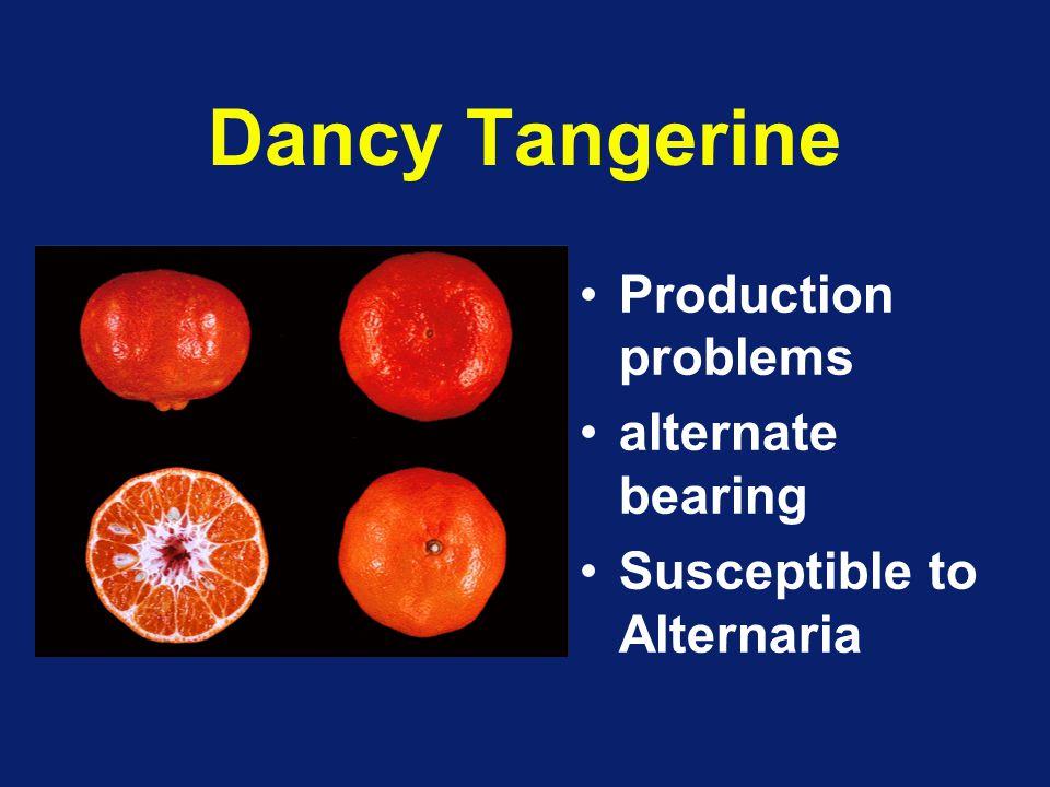 Dancy Tangerine Production problems alternate bearing
