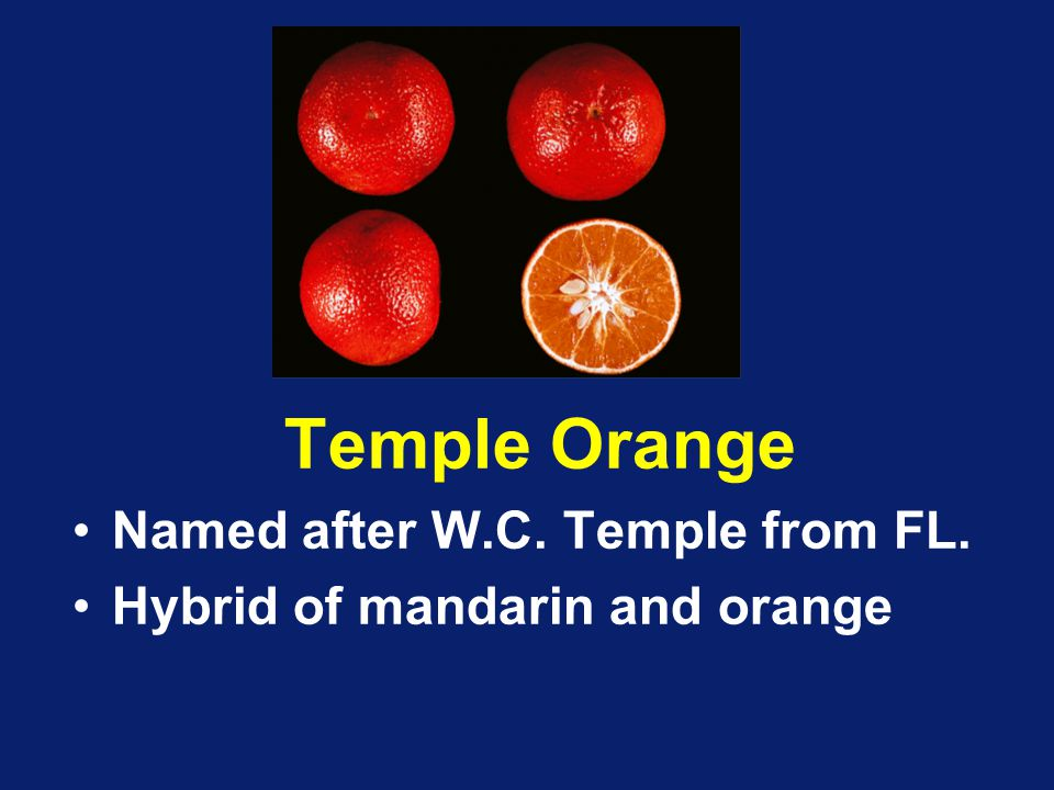 Temple Orange Named after W.C. Temple from FL.