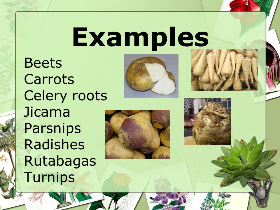 Examples Beets Carrots Celery roots Jicama Parsnips Radishes Rutabagas