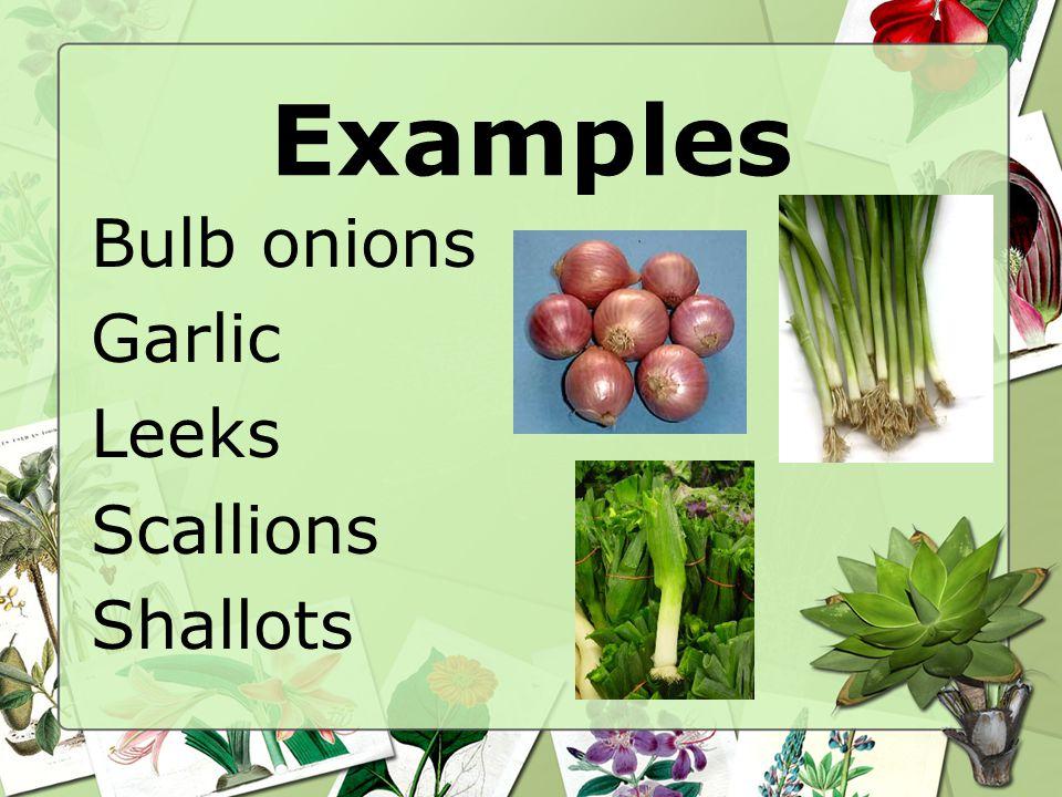 Examples Bulb onions Garlic Leeks Scallions Shallots