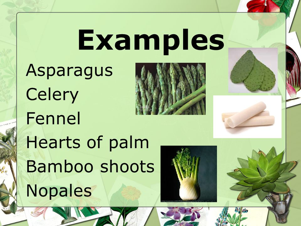 Examples Asparagus Celery Fennel Hearts of palm Bamboo shoots Nopales