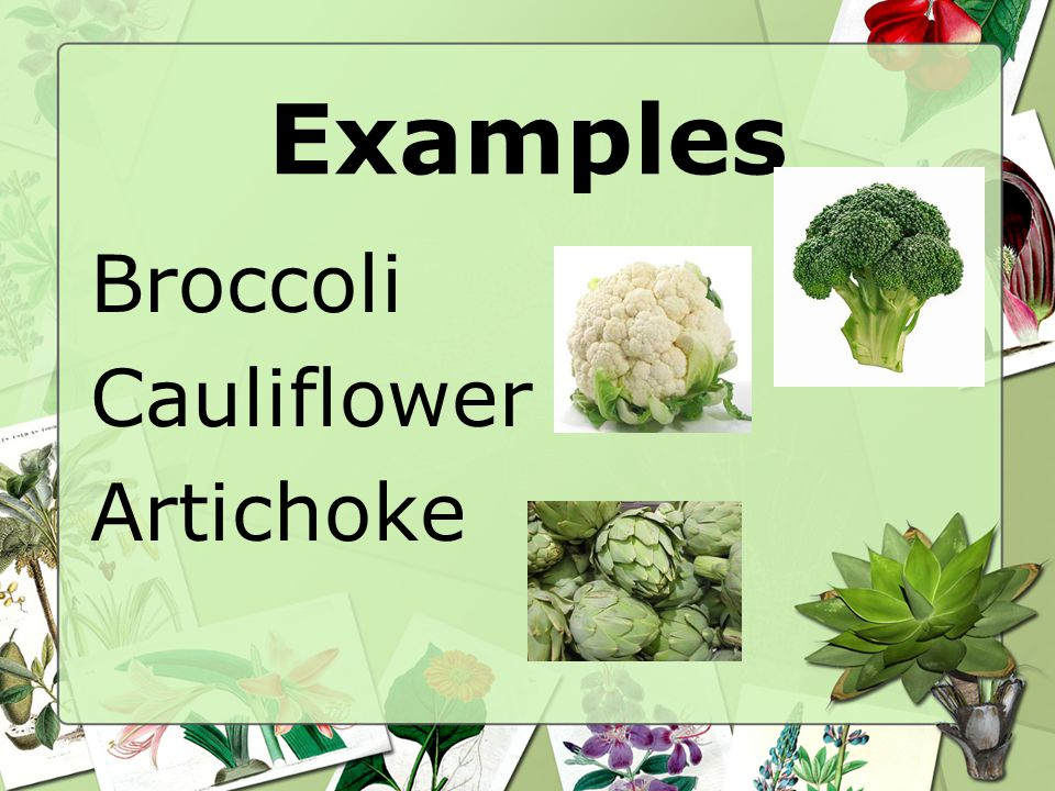 Examples Broccoli Cauliflower Artichoke