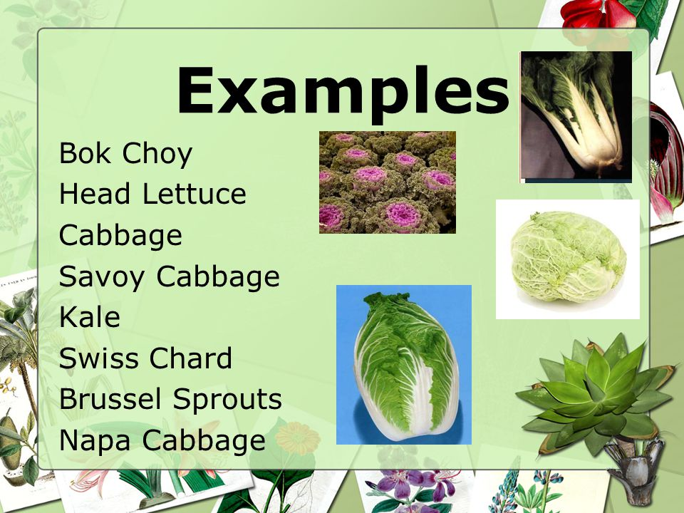 Examples Bok Choy Head Lettuce Cabbage Savoy Cabbage Kale Swiss Chard