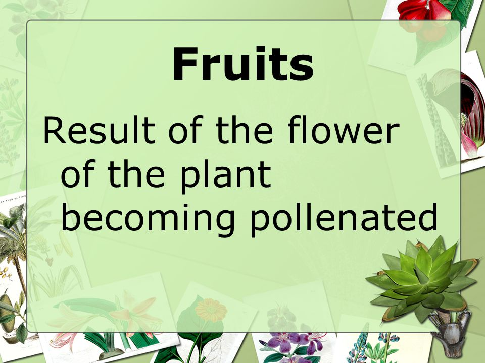 Fruits Result of the flower of the plant becoming pollenated