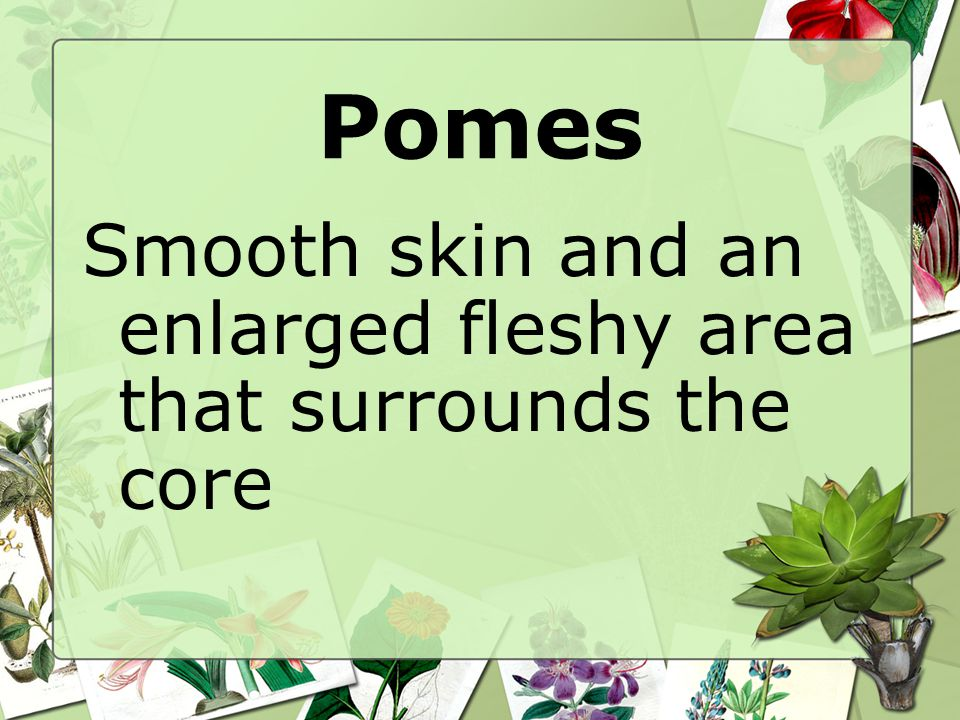 Pomes Smooth skin and an enlarged fleshy area that surrounds the core