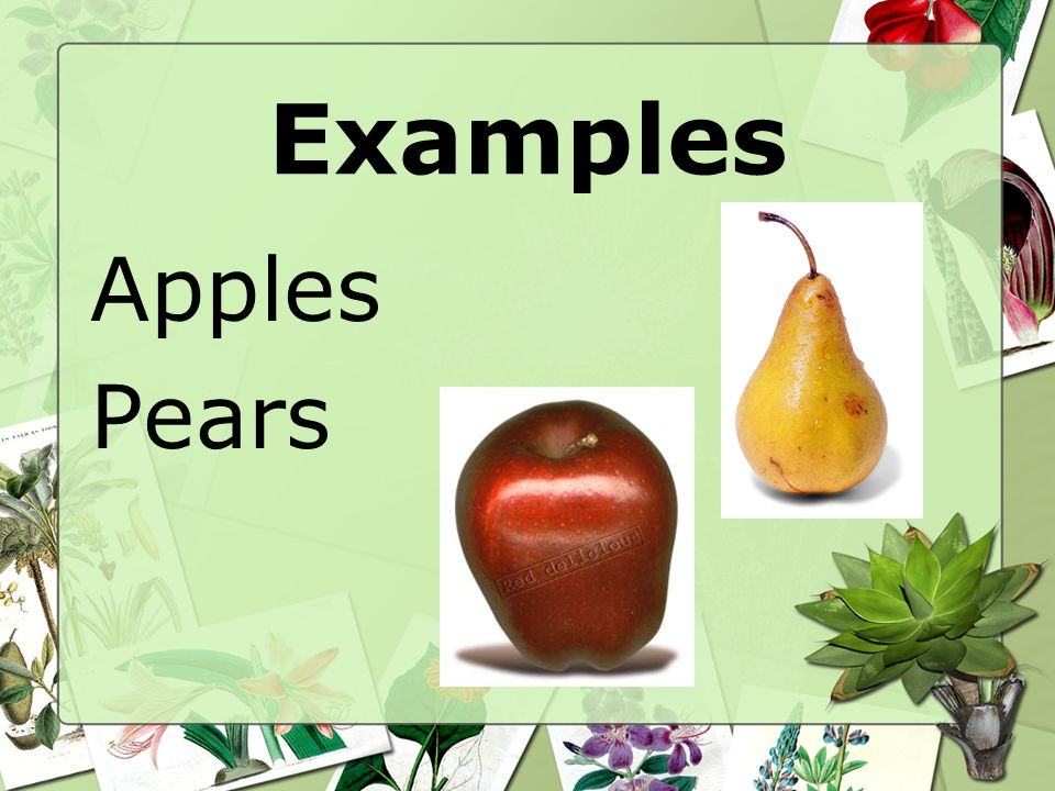 Examples Apples Pears