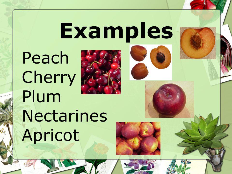 Examples Peach Cherry Plum Nectarines Apricot