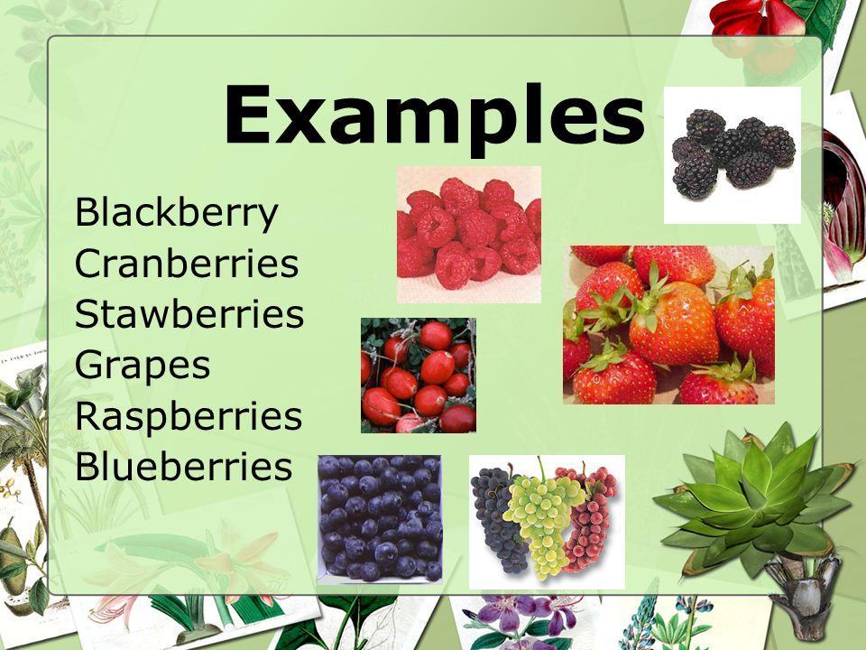 Examples Blackberry Cranberries Stawberries Grapes Raspberries