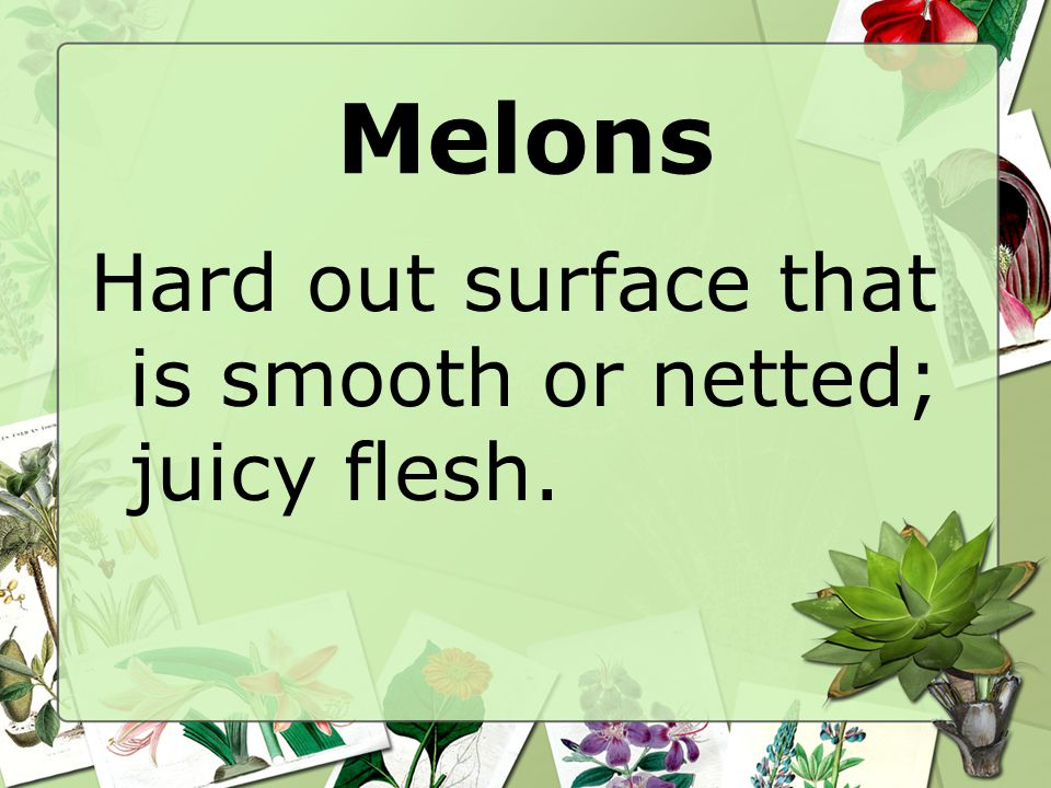 Melons Hard out surface that is smooth or netted; juicy flesh.