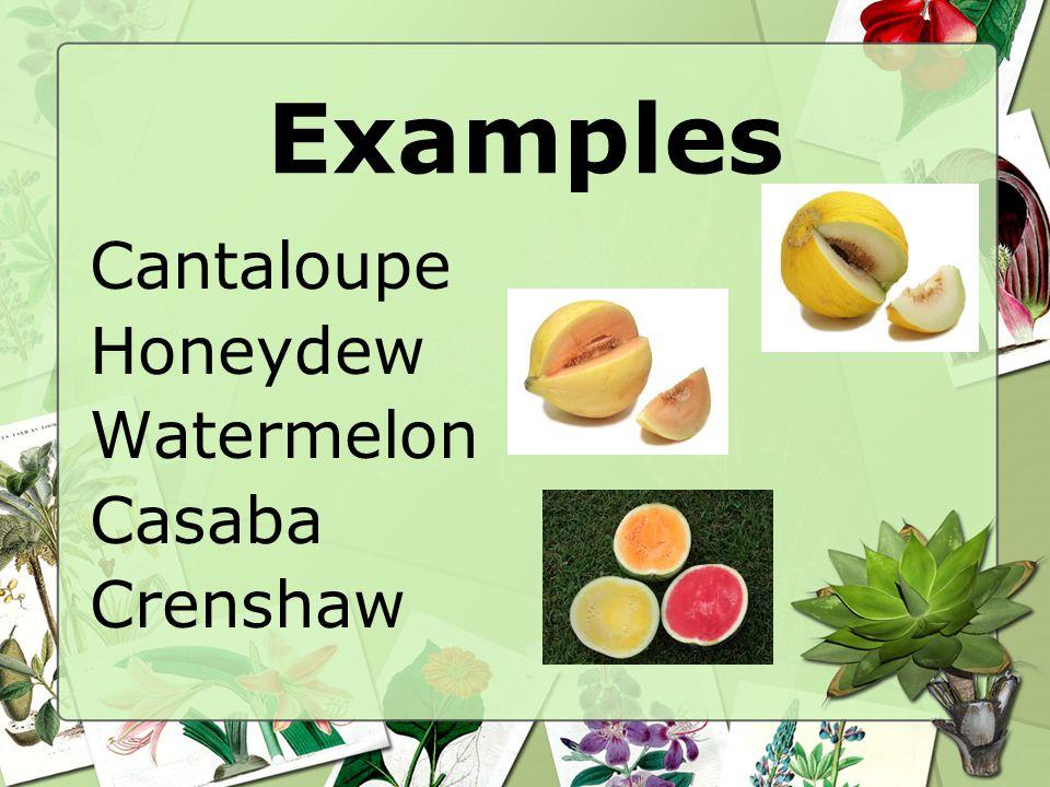 Examples Cantaloupe Honeydew Watermelon Casaba Crenshaw
