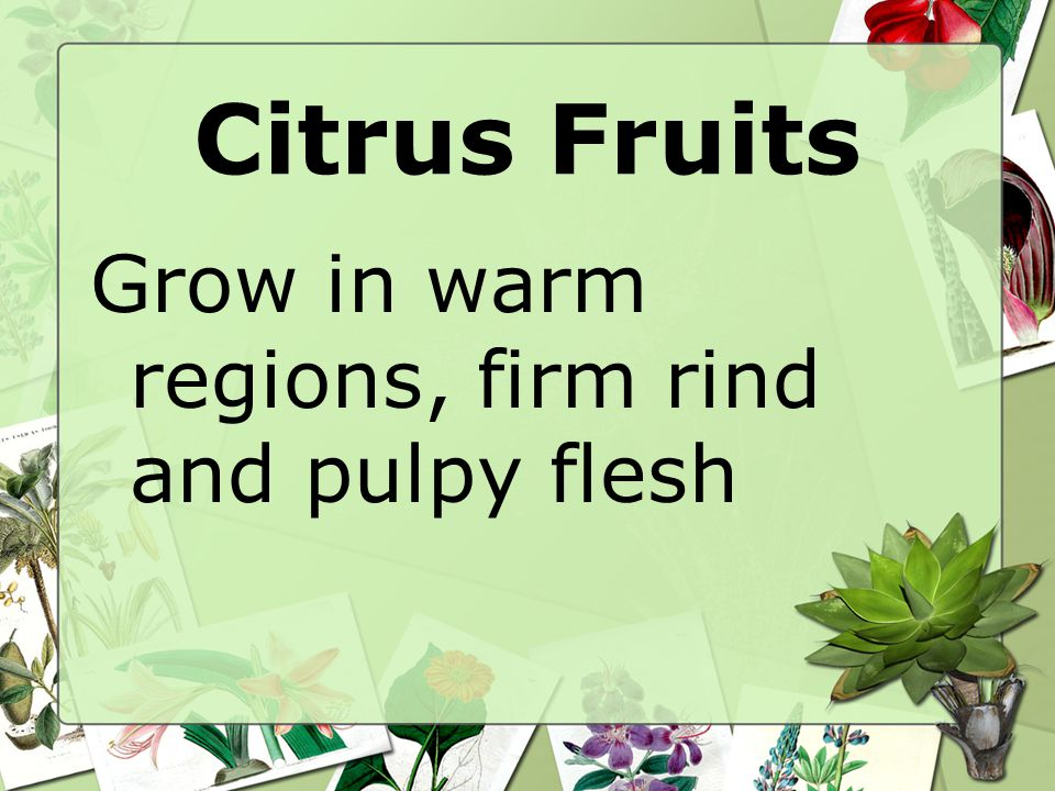 Citrus Fruits Grow in warm regions, firm rind and pulpy flesh