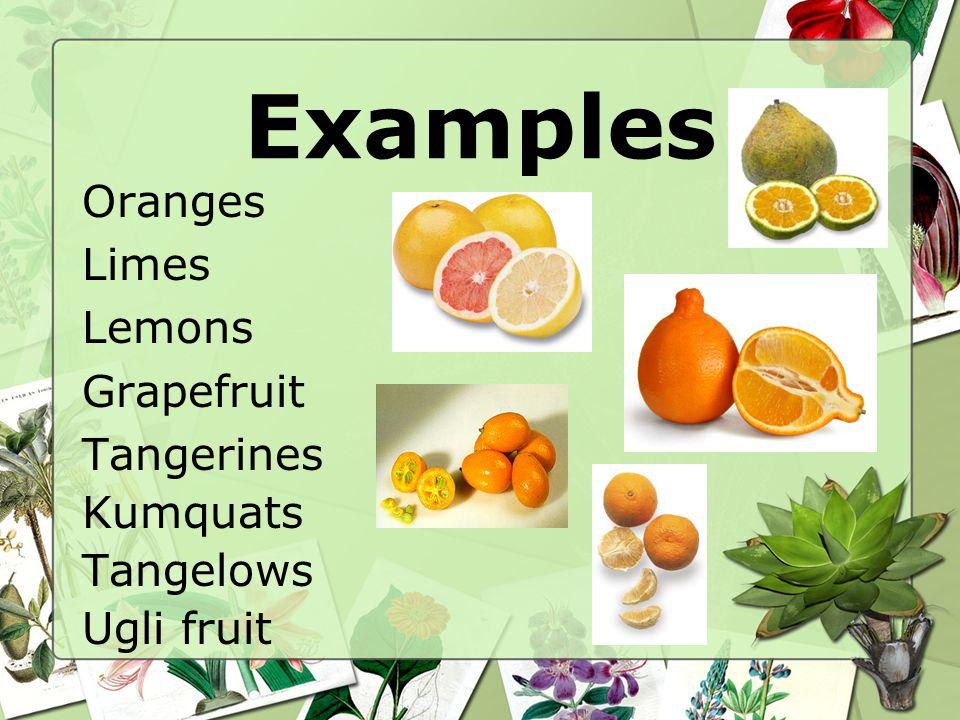 Examples Oranges Limes Lemons Grapefruit Tangerines Kumquats Tangelows Ugli fruit