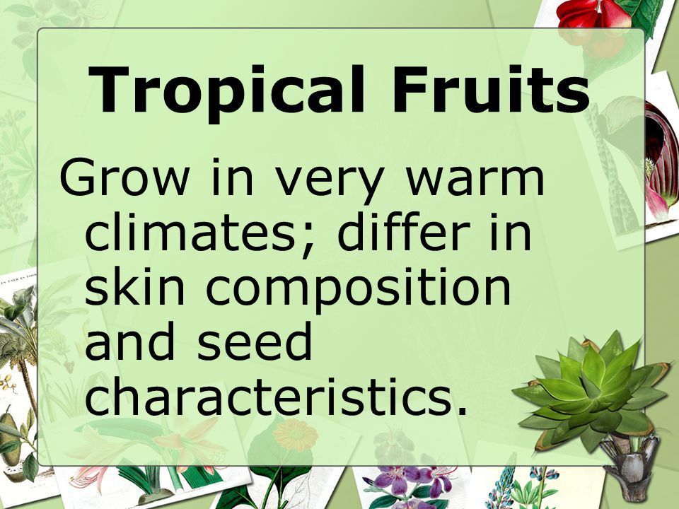 Tropical Fruits Grow in very warm climates; differ in skin composition and seed characteristics.