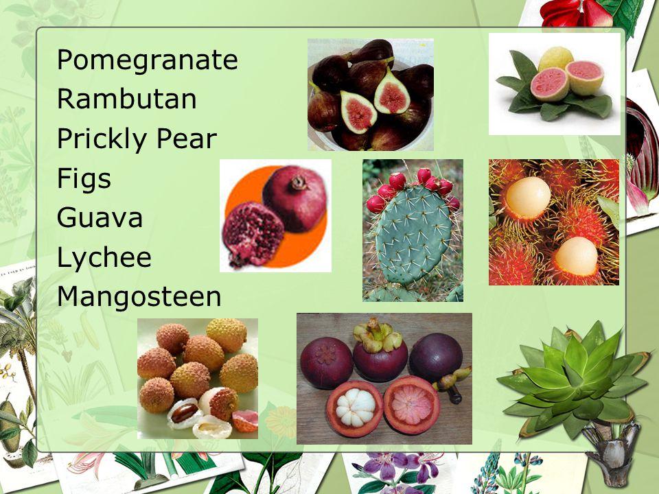 Pomegranate Rambutan Prickly Pear Figs Guava Lychee Mangosteen