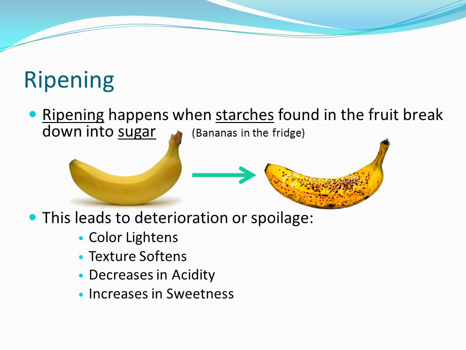 Ripening Ripening happens when starches found in the fruit break down into sugar (Bananas in the fridge)