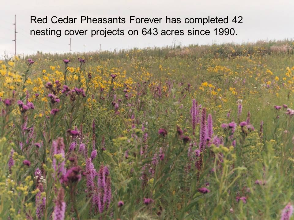 Red Cedar Pheasants Forever has completed 42 nesting cover projects on 643 acres since 1990.