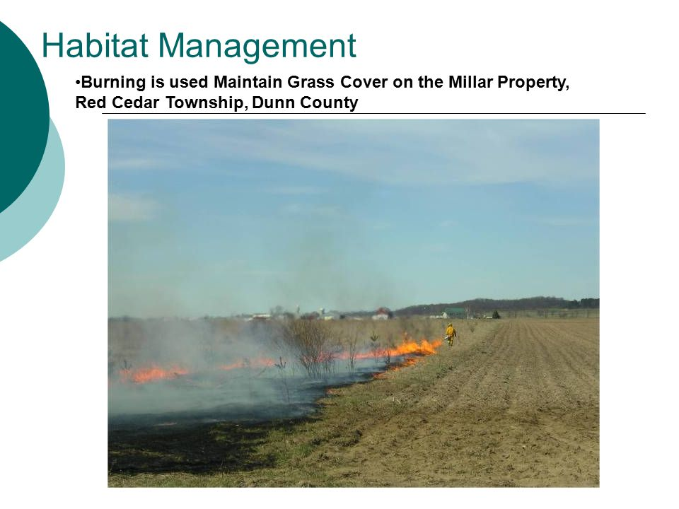 Habitat Management Burning is used Maintain Grass Cover on the Millar Property, Red Cedar Township, Dunn County.