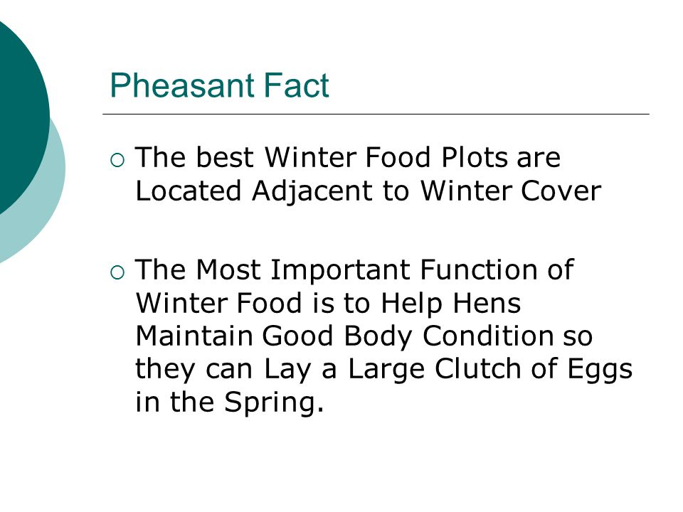 Pheasant Fact The best Winter Food Plots are Located Adjacent to Winter Cover.