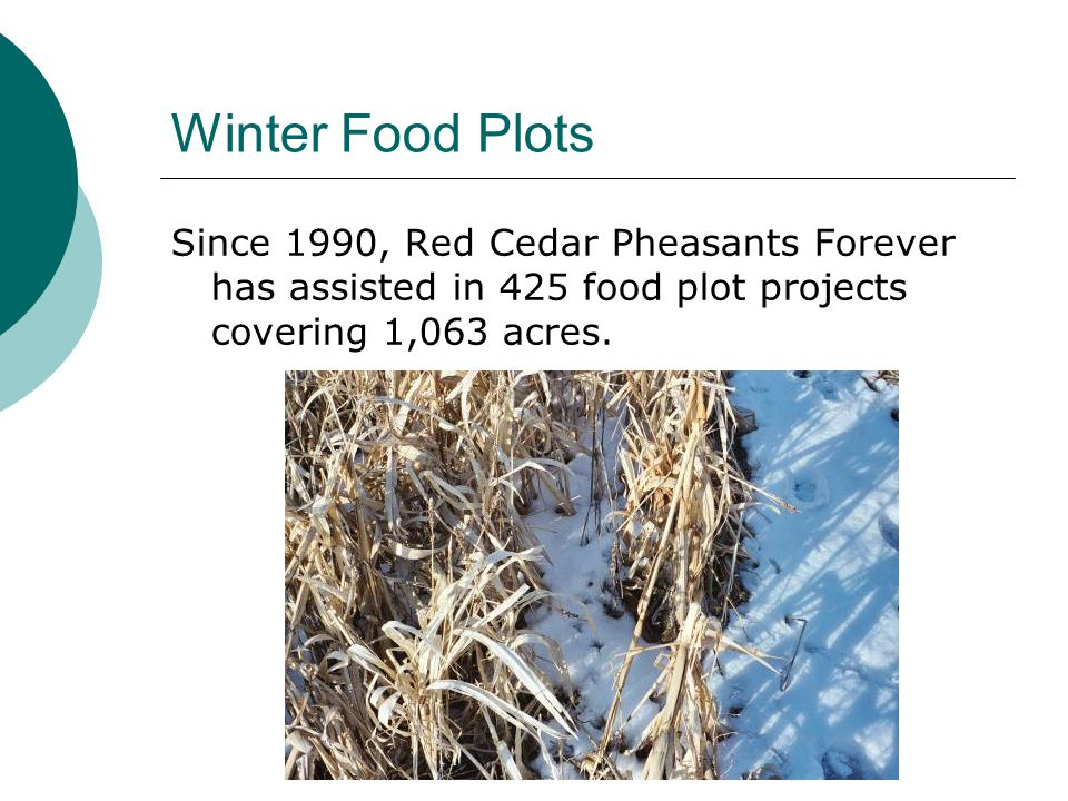 Winter Food Plots Since 1990, Red Cedar Pheasants Forever has assisted in 425 food plot projects covering 1,063 acres.