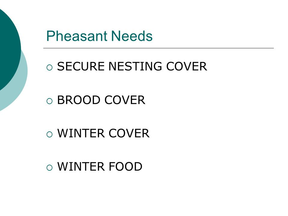 Pheasant Needs SECURE NESTING COVER BROOD COVER WINTER COVER