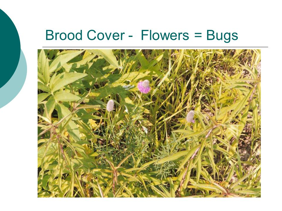 Brood Cover - Flowers = Bugs