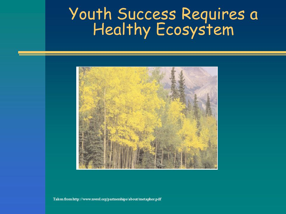 Youth Success Requires a Healthy Ecosystem