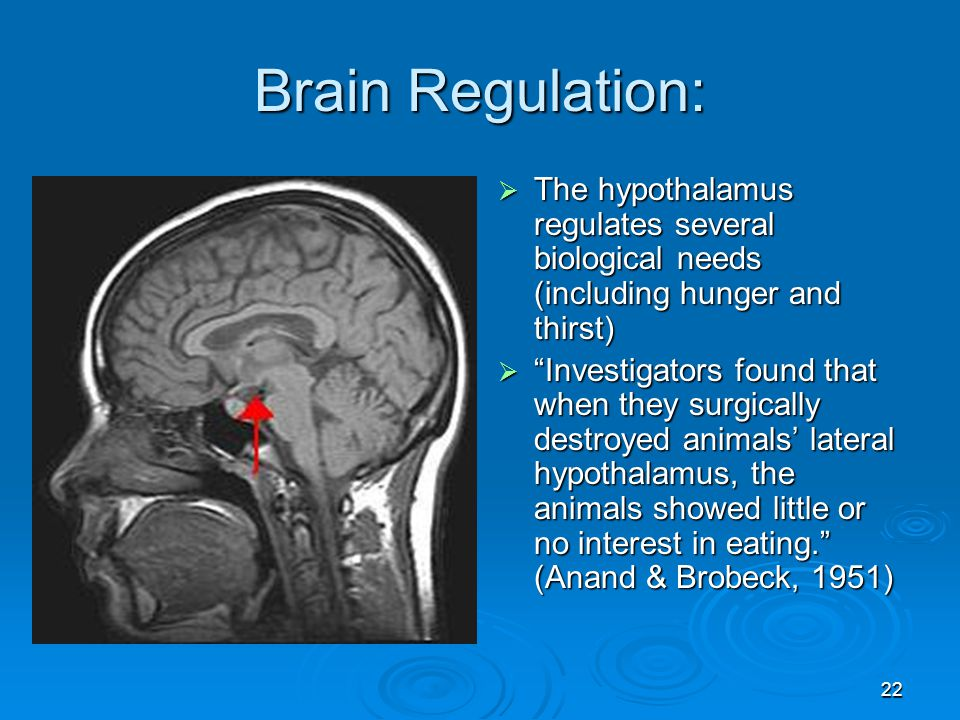 Brain Regulation: The hypothalamus regulates several biological needs (including hunger and thirst)