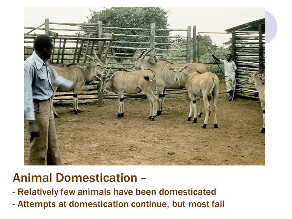 Animal Domestication –