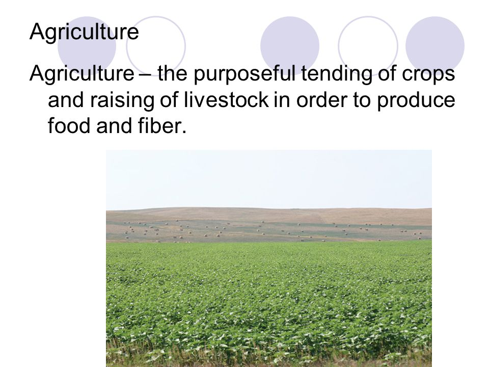 Agriculture Agriculture – the purposeful tending of crops and raising of livestock in order to produce food and fiber.