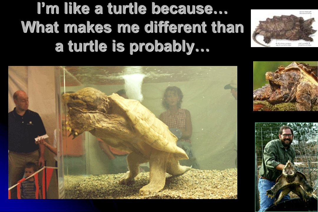 I'm like a turtle because… What makes me different than a turtle is probably…