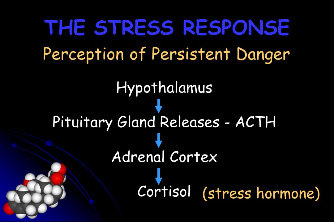 THE STRESS RESPONSE Perception of Persistent Danger Hypothalamus