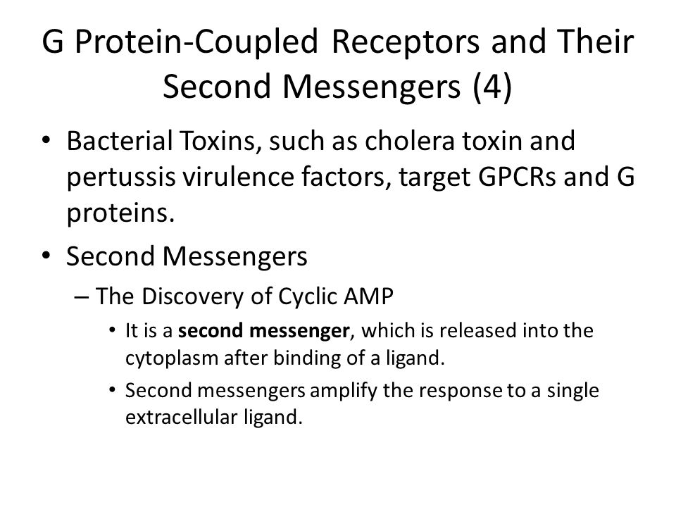 G Protein-Coupled Receptors and Their Second Messengers (4)