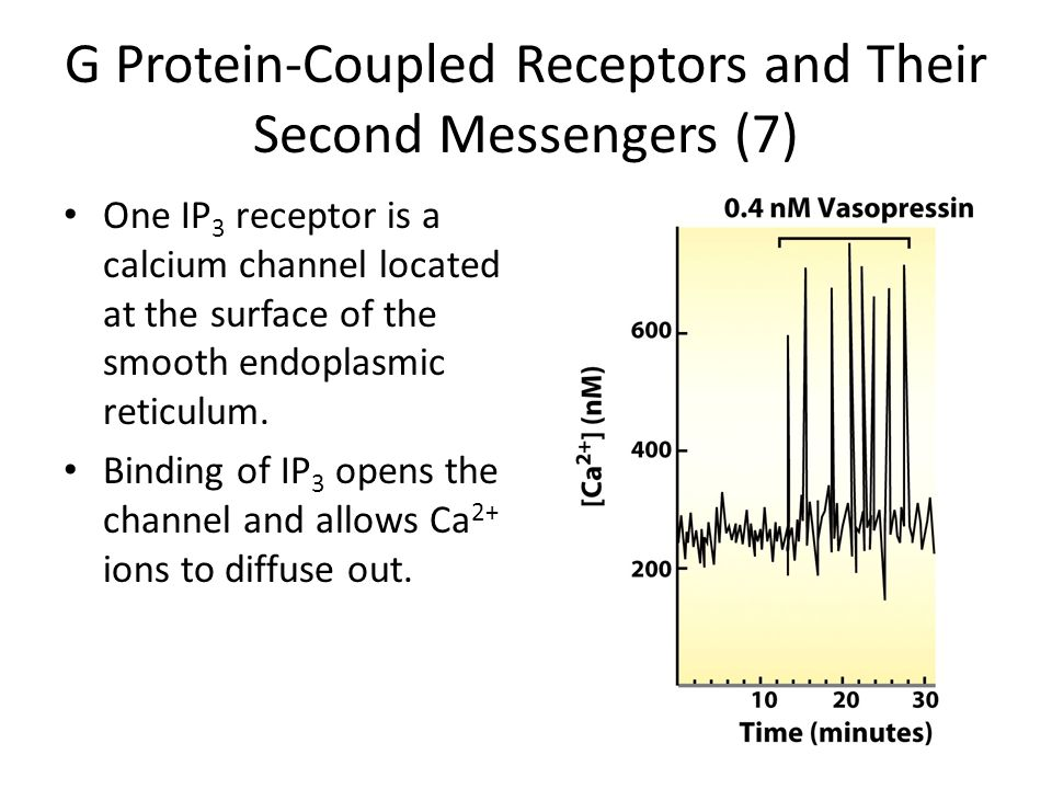 G Protein-Coupled Receptors and Their Second Messengers (7)
