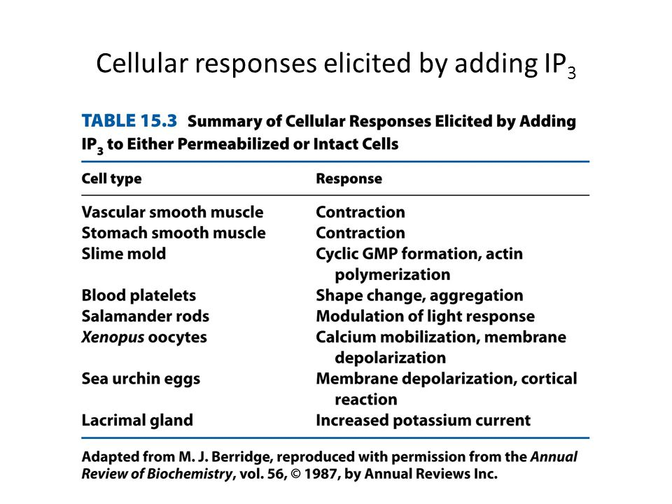 Cellular responses elicited by adding IP3