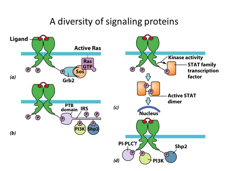 A diversity of signaling proteins