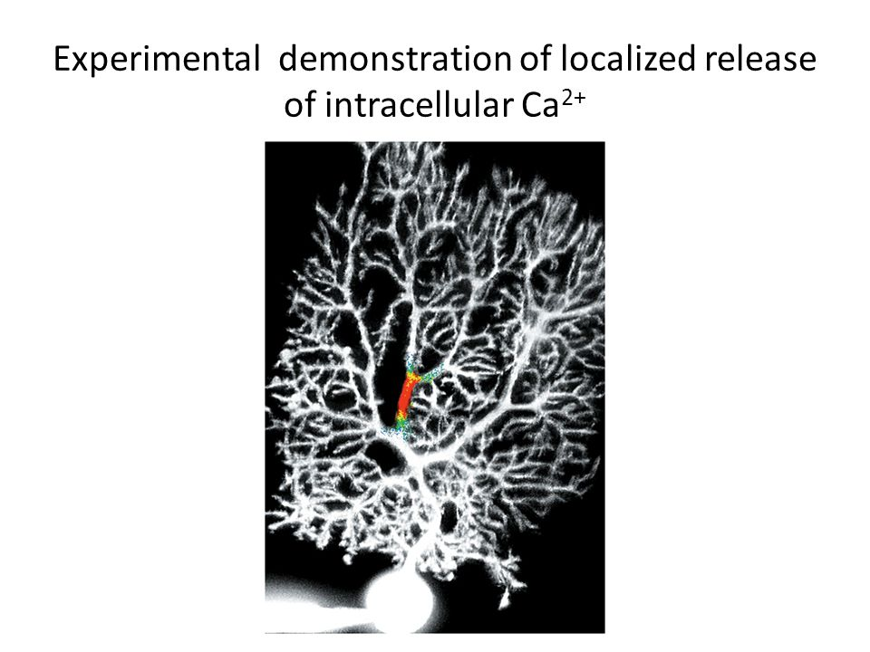 Experimental demonstration of localized release of intracellular Ca2+