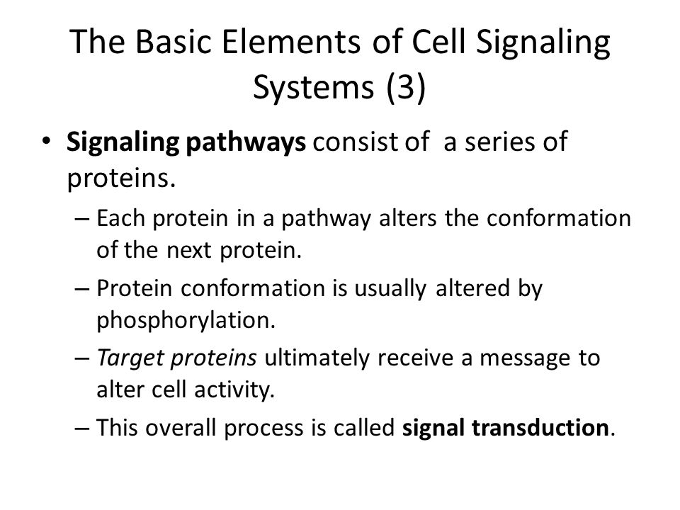 The Basic Elements of Cell Signaling Systems (3)