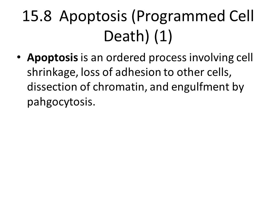 15.8 Apoptosis (Programmed Cell Death) (1)