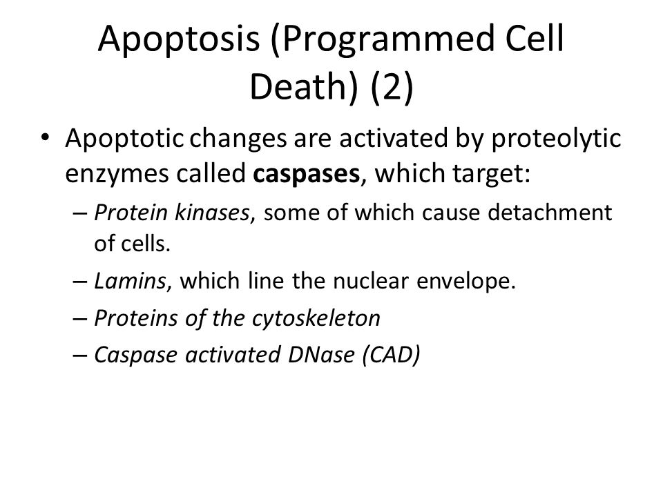 Apoptosis (Programmed Cell Death) (2)