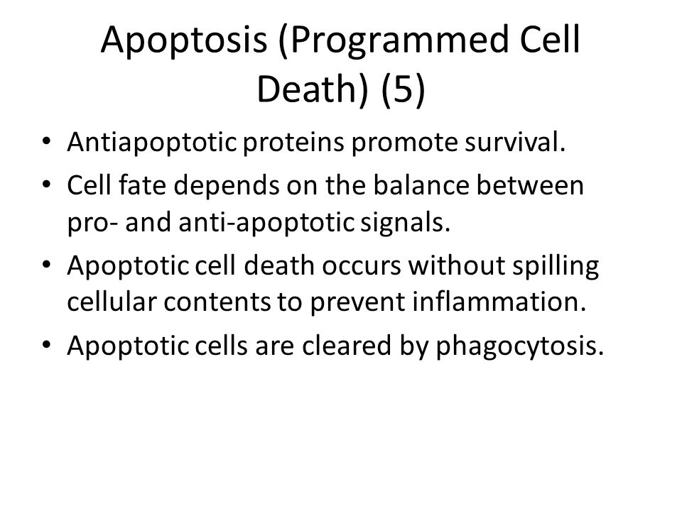 Apoptosis (Programmed Cell Death) (5)