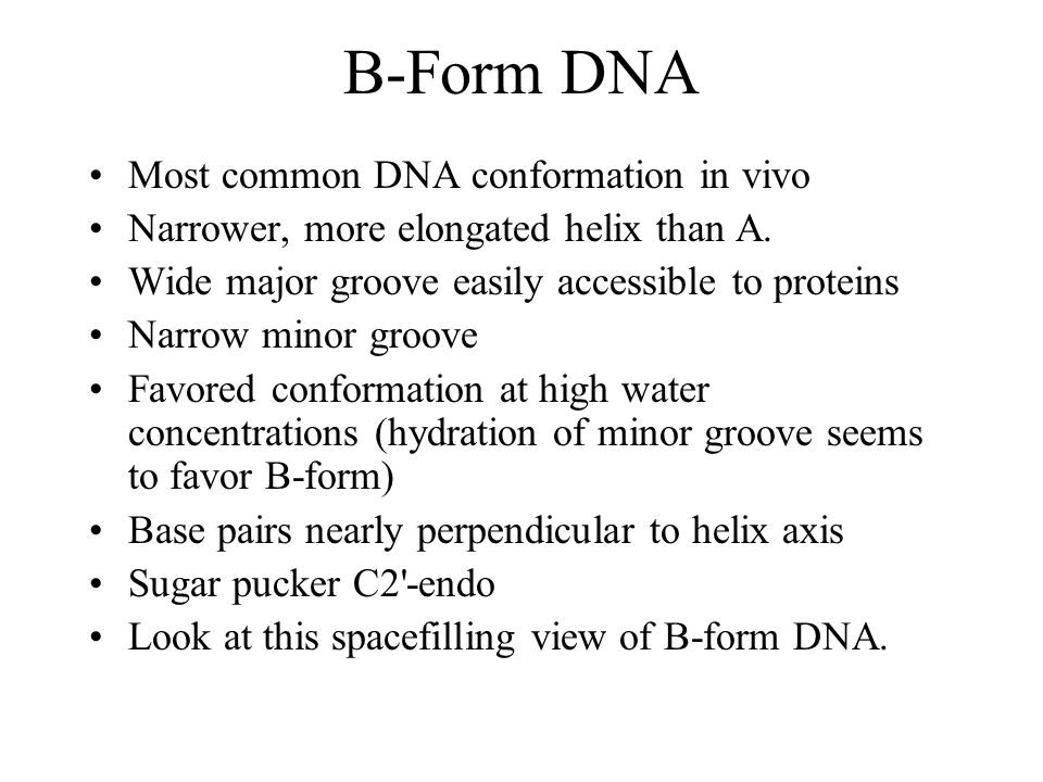 B-Form DNA Most common DNA conformation in vivo