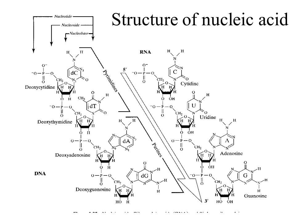 Structure of nucleic acid