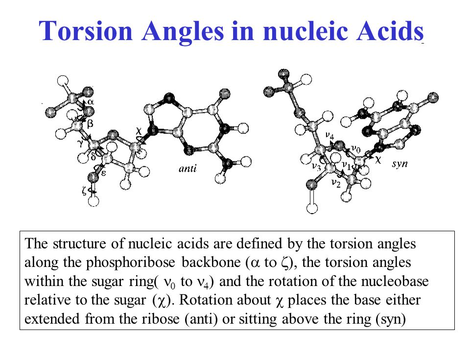 Torsion Angles in nucleic Acids